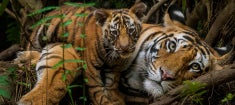 Nat-Geo_Big-Cats_235.jpg