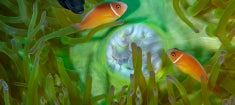 Nat-Geo_Coral-Kingdom_235.jpg