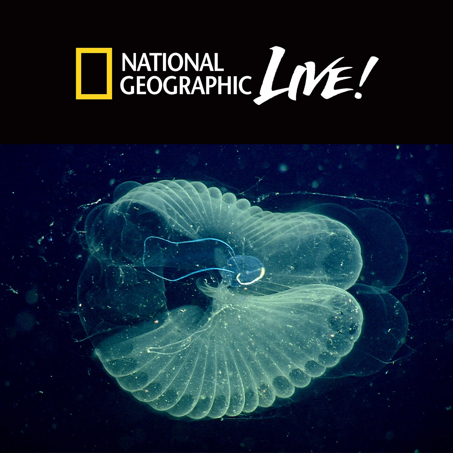 National Geographic Live: Designed by Nature