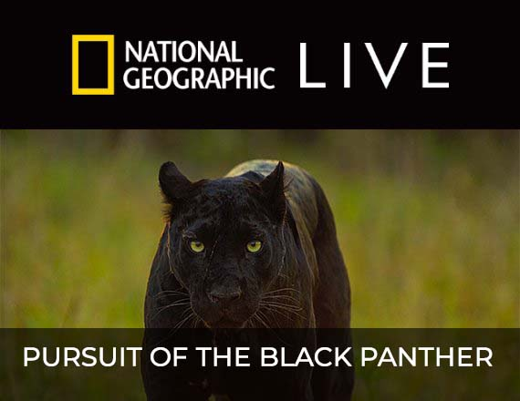 More Info for National Geographic Live: Pursuit of the Black Panther