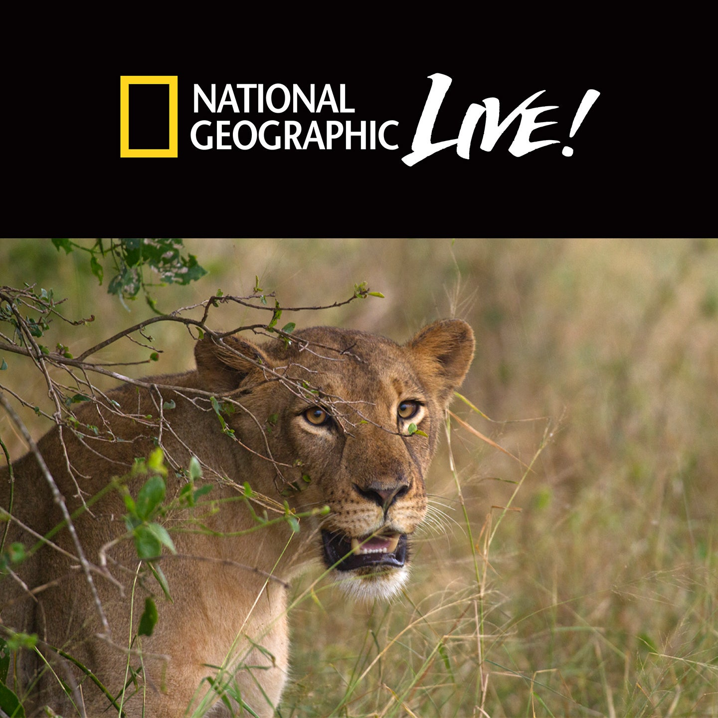National Geographic Live: Nature Roars Back