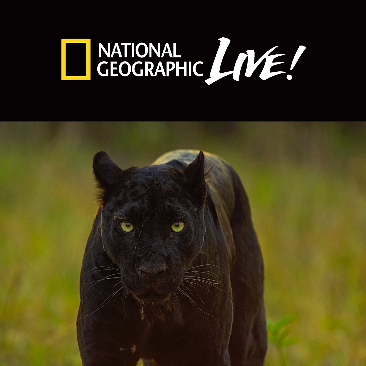 National Geographic Live: Pursuit of the Black Panther